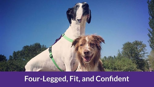 Four-Legged, Fit, and Confident Complete Series