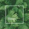 Bloom Meditation