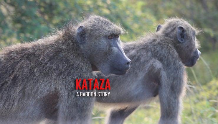Kataza a Baboon Story