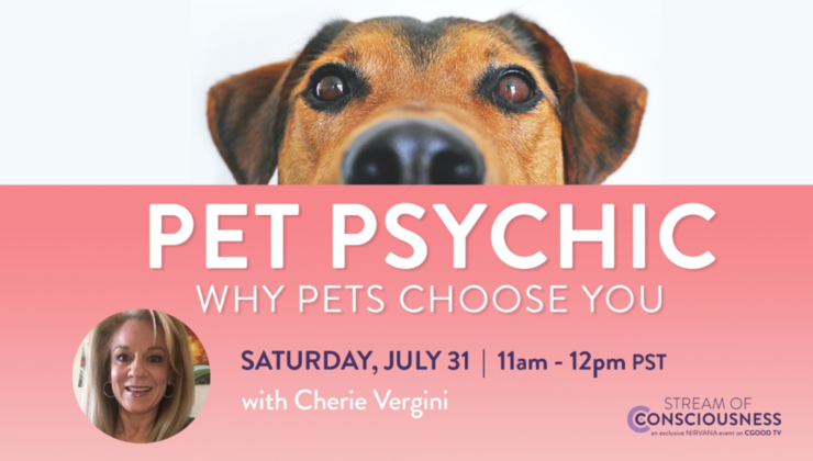 Pet Psychic | Why Pets Choose You with Cherie Vergini