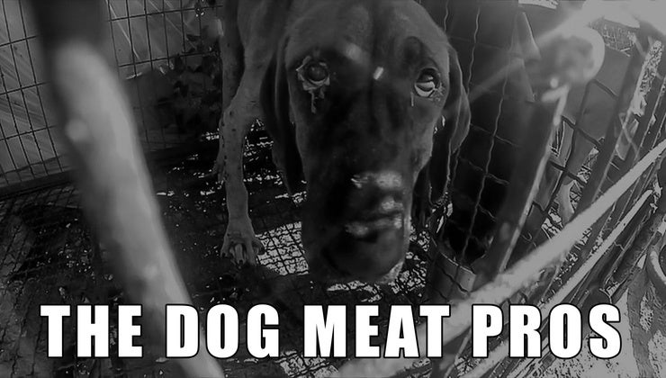 The Dog Meat Pros